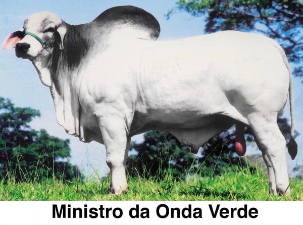 VENDA TABAPUÃ ONDA VERDE