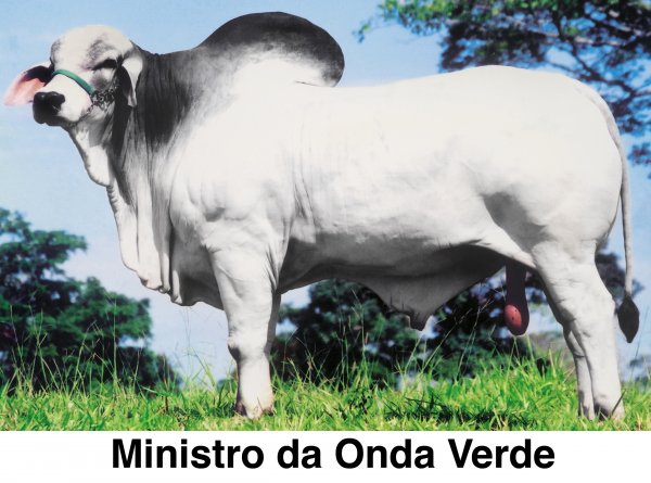 Venda de VENDA TABAPUÃ ONDA VERDE
