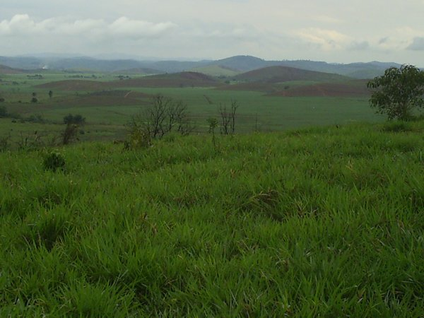Venda de FAZENDA ZONA DA MATA  MG