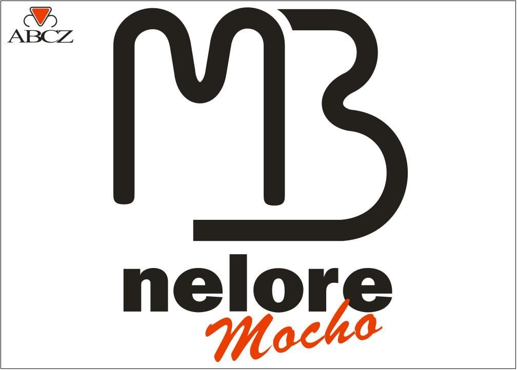 TOUROS NELORE MOCHO PO