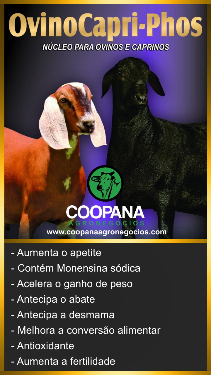 Venda de OVINOS E CAPRINOS!!!