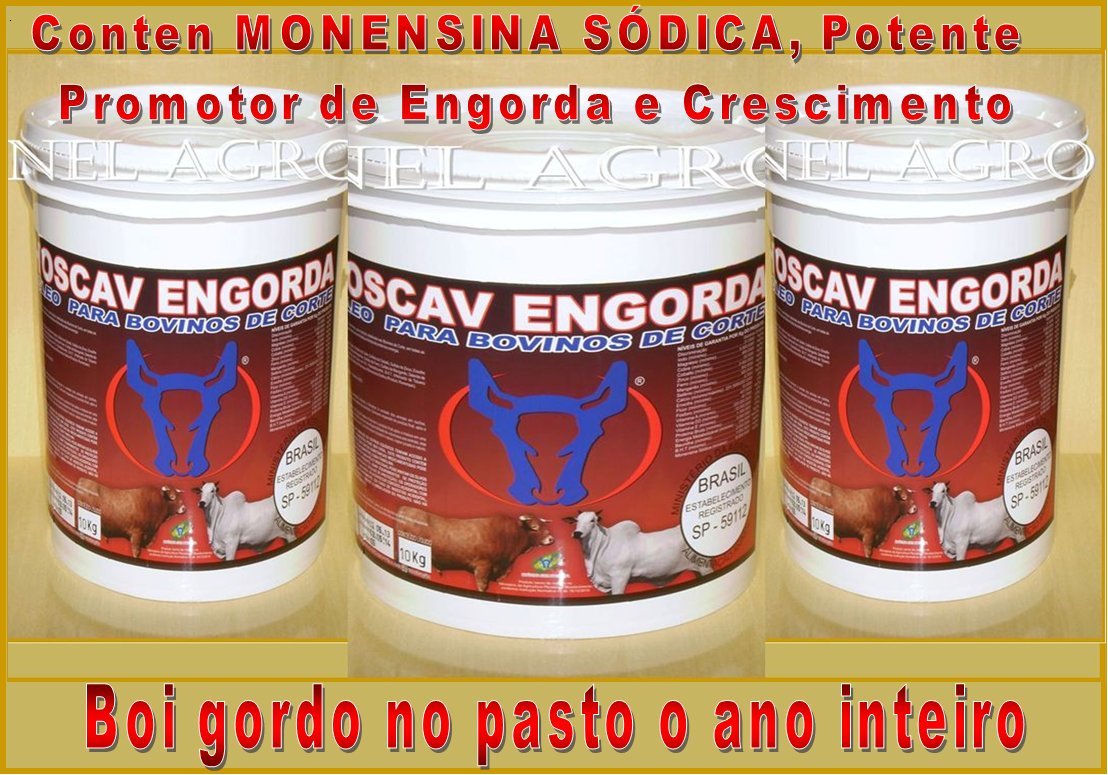 SUPLEMENTO P/ ENGORDA