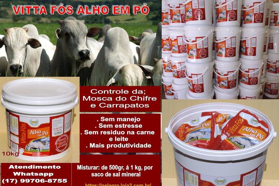 VITTA FÓS ALHO/ KIT 4X1