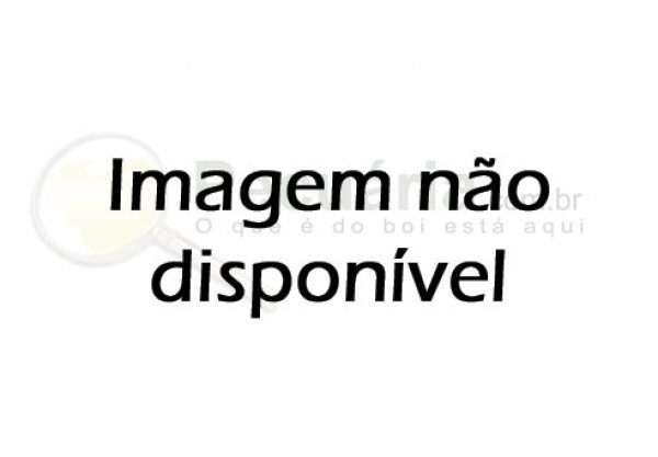 GADO NELORE PO