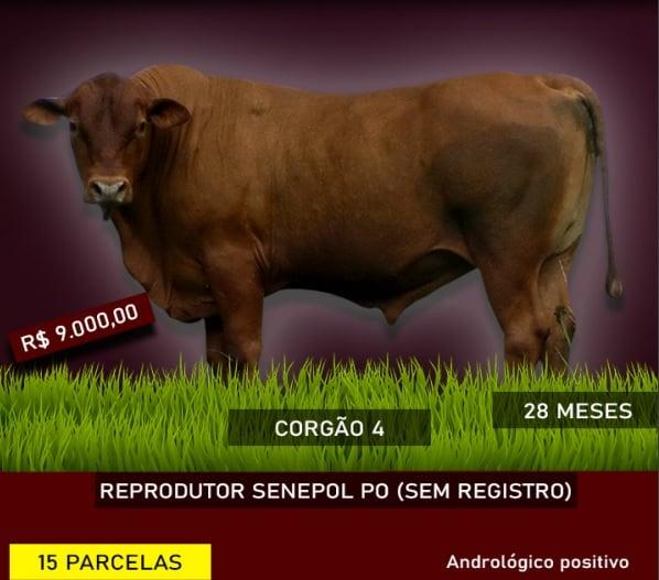 GADO SENEPOL P.O.