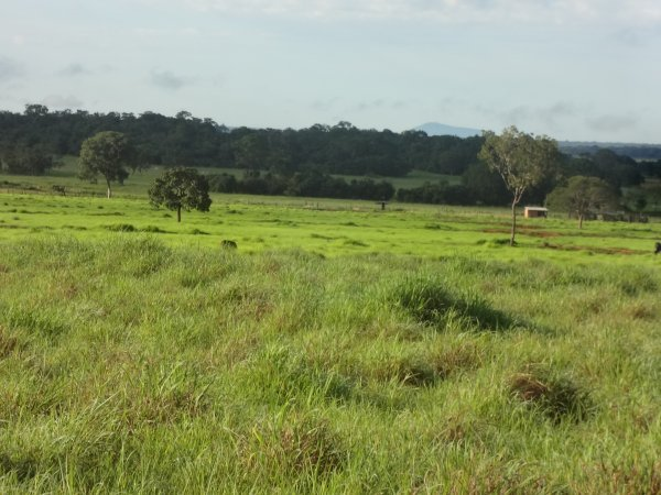 Venda de FAZENDA EM TOCANTINS