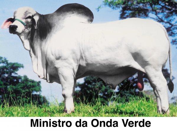 TABAPUÃ ONDA VERDE VENDA