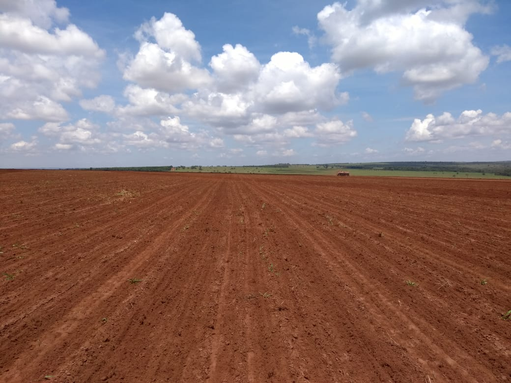 Venda de FAZENDA 130 HECTARES